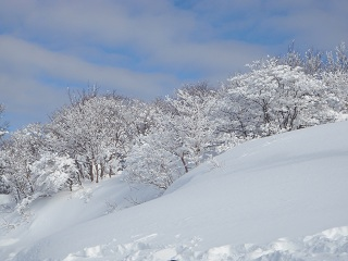 saioto20120108-4.jpg